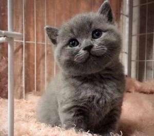 如何与猫咪相处?和猫培养感情的方法